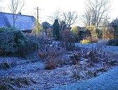 Garden through the seasons Hiver Le Clos du Coudray ; Hosta X tardiana 'Halcyon'