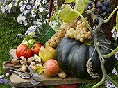 Composition Fruits and Vegetables Flowers in autumn