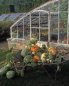 Harvest of squashes in front of a greenhouse