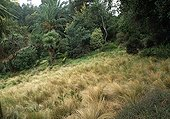 Giant feather grass and Cordyline in a garden France ; The Garden New Zealand