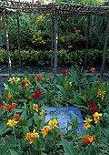 Canna and Plectranthus in a summer garden Tarn France ; Canna et Plectranthus dans un jardin l'été Tarn France