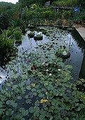 Water Lily in the Garden of water from a garden Tarn France ; Sculpture: Michel Wohlfahrt