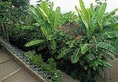 Banana Princesstree and Kiss me over the garden gate
