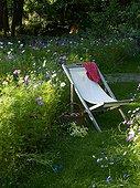Prairie flowers in summer Jardin de Campagne France