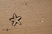 Starfish sinking into the sand Ganpatipule India