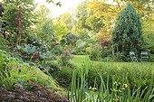 Palmate Rhubarb and iris at the poolside Jardin des Lianes ; <br>Le jardin des Lianes