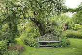Rose 'Seagull' on Apple Bench and Rose 'Phyllis Bide' ; Le jardin des lianes