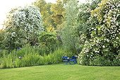 Rose 'Seagull' on Apple and Rose 'Ghislaine de Feligonde' ; Le jardin des lianes