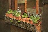 Joubardes pot shack children Le Jardin des Lianes ; Le jardin des lianes