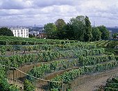 Vineyard of Suresnes with Paris on the background