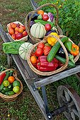 Wheelbarrow fruit and vegetable garden in Provence France