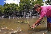 Kanak woman catching a crab mangroveNew Caledonia
