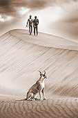 """Caracal on dunes with San hunters in the background Namibia ; In the private reserve named """"N/a'an ku sê"""", welfare programs and health support converge to maintain populations of Bushmen in good health and to reintroduce the wild Cheetahs. This nomadic group of hunter-gatherers has a history dating back over 20,000 years. Their close relationship and perfect their knowledge of animals allowed to live and feed in the deserts of southern Africa."""