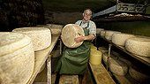 Salers Cheese farmer France ; Manufacturing traditional farm. Reversal of cheeses in the cellar of drying and curing