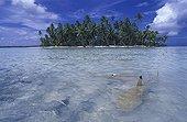 Blacktip reef sharks in Rangiroa Lagoon French Polynesia