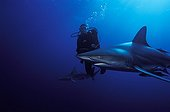Diver and Blacktip Shark swimming South Africa Indian Ocean