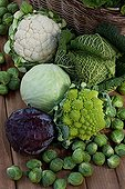 Harvest of cabbages