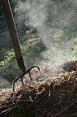 Horse manure smoking with a fork-spade in a garden