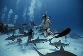 Shark expert swimming with Caribbean Reef Shark Bahamas ; Shark expert Neal Watson