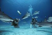 Photographer photographing Caribbean Reef Shark