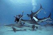 Photographer photographing eye of Caribbean Reef Shark