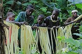 Pygmy Baaka population in south-eastern Cameroon ; Preparation of plants to weave a ceremony before hunt