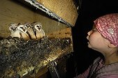 Child looking inside a nesting box for Barn Owl