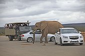 Car and Elephant in the Addo Elephant NP RSA
