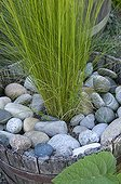 Potted grass and pebbles in the spring France