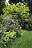 Mixed border in bloom in a garden ; Geranium 'Patricia'<br>Catalpa 'Aurea'