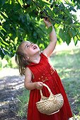 Girl picking cherries with a little basket France