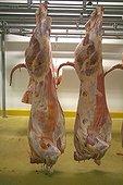 Pork carcasses hanging in a warehouse France ; Wholesale Meat