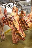 Meat carcasses hanging in a cold room France ; Wholesale Meat