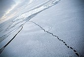 Bear tracks on the ice Amundsen Gulf Canada ; Everything goes wrong