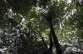 Undergrowth in rain forest Bijagua Costa Rica