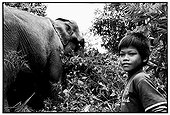 Young keeper and into the forest Elélaphant Cambodia