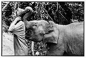 Elephant playing with his hat mahout Thailand