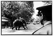 Elephant crossing the street before a police officer Sri Lanka