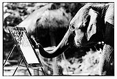 Asian Elephant painting with his trunk Thailand