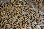 Preservation drying of potatoes in an attic ; Drying the potatoes in an attic if the harvest was done by humid weather
