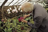 Deceased Mr Lecoufle in a conservatory pollinating orchids