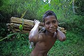 Boy carrying wood on his back Bajawa Flores Indonesia
