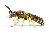 Mining Bee on whitebackground