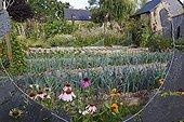 Lanes of leeks in an organic flowered kitchen garden