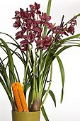 Cymbidium and thermometer symbolizing gardening ; Take care to the temperature when you cultivate orchids