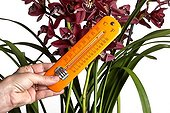 Cymbidium and thermometer symbolizing gardening ; Cultivating orchids needs to take care of the temperature