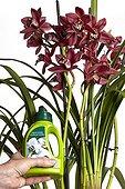 Cymbidium and orchids fertilizer