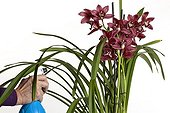 Spraying fertilizer or water to orchids