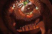 Man et Rafflesia in Asia ; Rafflesia is the biggest flower in the world