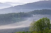 Bohemian Forest  view from Mitterfirmiansreuth Bavaria ; Over the border to the lower mountain ranges of Bohemian Forest, morning fog in spring, before sunrise, Bavaria and Czech Republic